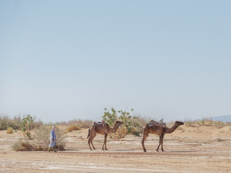 Beldi Nomad Camel Trekking accross Sahara Desert, Morocco