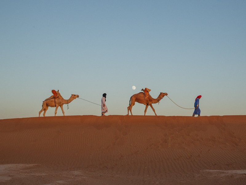 Tour Guides Crossing the Moroccan Desert With Camels Under the Moon