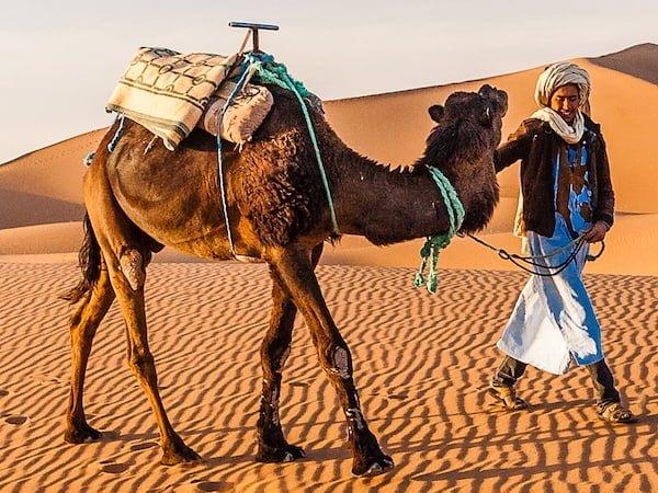 Berber Guide with Camel Trekking through the Sahara Desert