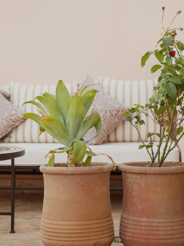 Room Interior with Couch and Terracotta pots containing Cacti and Herb Plants