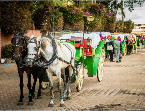 Top Travel Tips for visiting Marrakech