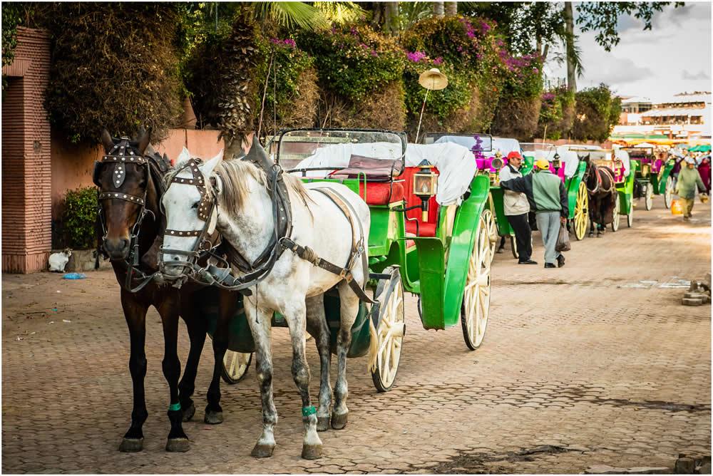 Marrakech carriage ride